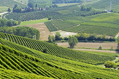 Hills with vineyards Stock Images