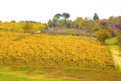 Hills of vineyards in autumn in Italy. stock image