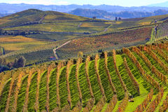 Hills and vineyards in autumn in Piedmont, Italy. Stock Photo