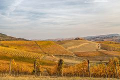 Hills of vineyards in autumn in Piedmont Piemonte, Italy. Hills of vineyards in autumn in Piedmont Piemonte, Italy, Europe royalty free stock photo