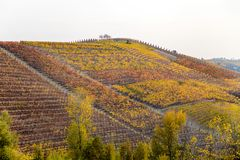 Hills of vineyards in autumn in Piedmont Piemonte, Italy. Hills of vineyards in autumn in Piedmont Piemonte, Italy, Europe stock photography
