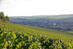 Hills of vineyards of châblis (Burgundy France) Royalty Free Stock Photos