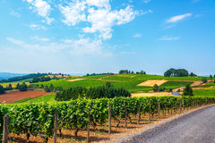 Hills of Vineyards Stock Image
