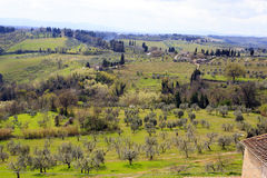 Hills, vineyards and cypress trees Stock Photos