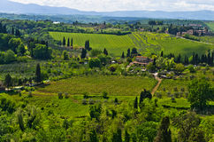 Hills, vineyards and cypress trees, Tuscany landscape near San Gimignano Royalty Free Stock Photography
