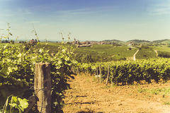 Hills and vineyards in the hot season. Hills and vineyards in hot season Royalty Free Stock Images