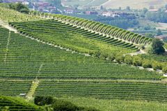 Hills with vineyards near Barbaresco Royalty Free Stock Images