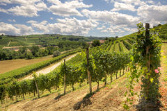 Hills and vineyards of Piedmont. Stock Image