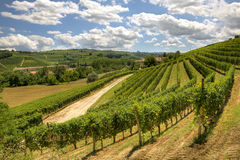 Hills and vineyards of Piedmont, Italy. Stock Image