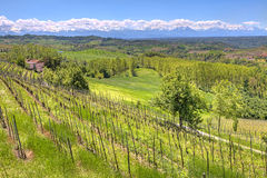Hills and vineyards of Piedmont, Italy. Royalty Free Stock Photography
