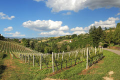 Hills and vineyards of Piedmont. Northern Italy. Royalty Free Stock Images