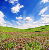Hills of violet flowers on a background cloudy sky Stock Image