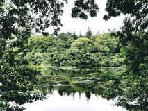Hillsborough湖 库存照片