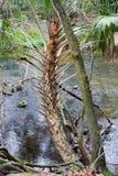 Hillsborough-Flusspark Lizenzfreie Stockfotografie