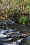Hillsborough River, Florida. Rapids on the Hillsborough River in Florida Stock Photos