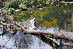 Hillsborough river park Stock Images