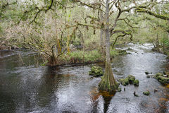 Hillsborough river Stock Image