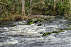 Hillsborough river Royalty Free Stock Photo