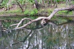 Hillsborough rzeki park Obrazy Stock