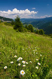 On the hillside... Royalty Free Stock Image