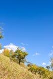 hillside стоковая фотография