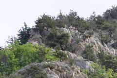 hillside Photo stock