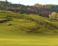 hillside Стоковое Изображение