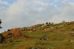 hillside Стоковые Изображения RF