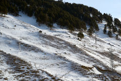 hillside стоковая фотография rf