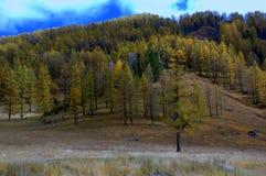 hillside стоковое фото