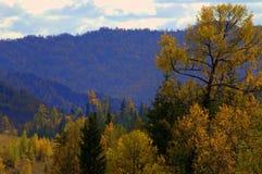 hillside стоковое изображение rf