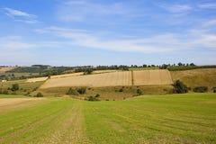 Hillside agriculture Stock Images