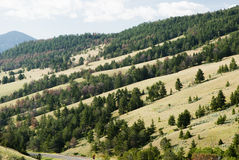 Hillside along Chief Joseph Scenic Byway. View of trees and hillside along Chief Joseph Scenic Byway in Wyoming Royalty Free Stock Photos
