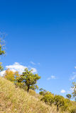 hillside Stock Photography