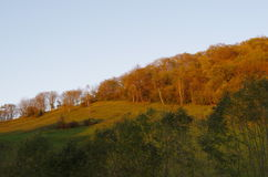 Hillside in autumn. View of hilly landscape with trees, in autumn Stock Photos