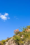 hillside in the autumn Royalty Free Stock Images