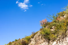 hillside in the autumn Stock Photography