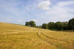 Hillside barley fields Stock Photo