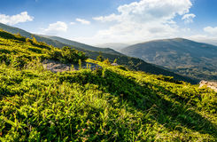 Hillside with boulders in Carpathian mountains in summer. Grassy meadow with giant boulders on hillside. mountain ridge on a beautiful sunny summer day Royalty Free Stock Photo