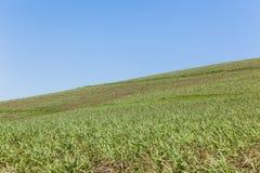 Hillside che coltiva paesaggio Immagine Stock Libera da Diritti