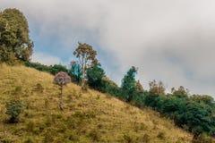 Hillside con l'albero nel mezzo fotografia stock libera da diritti