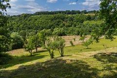 Hillside con la falciatura sparsa del fieno per l'essiccamento sotto gli alberi Immagini Stock