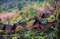 Hillside cottages. Many cottages on hillside of Doi Angkang Thailand Royalty Free Stock Photos