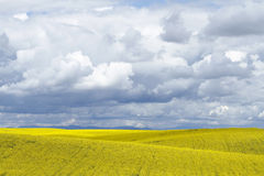 Hillside crops and clouds Stock Images