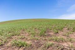Hillside cultivant le paysage Image libre de droits