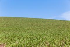 Hillside cultivant le paysage Photographie stock libre de droits