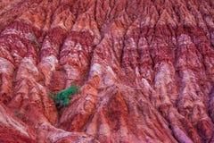 Hillside eroso Fotografia Stock Libera da Diritti