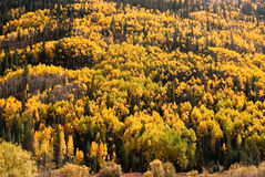 Hillside of Fall color Stock Images
