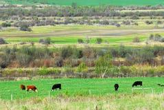 Hillside farm Royalty Free Stock Photo