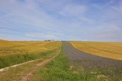 Hillside farm with barley crop Stock Photo